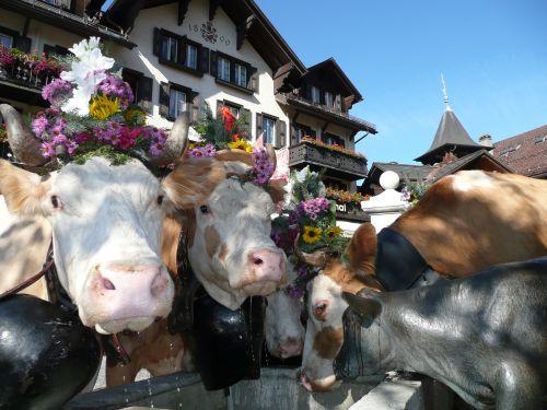 Tierische Misswahl mitten in Gstaad  TVTravelnews24de