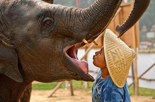 Anantara-Elefanten