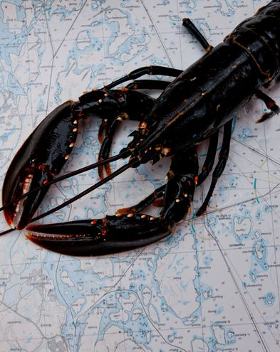 Schweden-Lobster