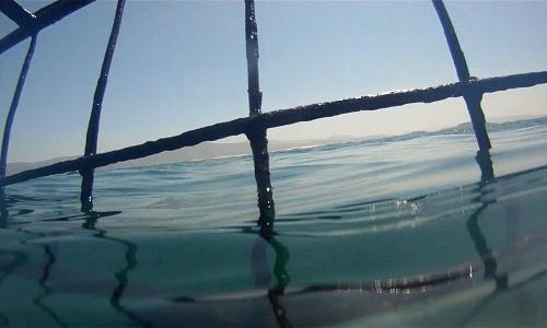 shark-cage2
