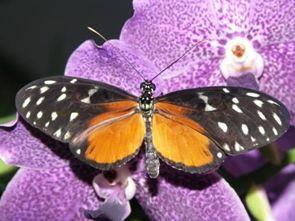 Schmetterlingsland