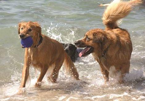 Hunde-Florida