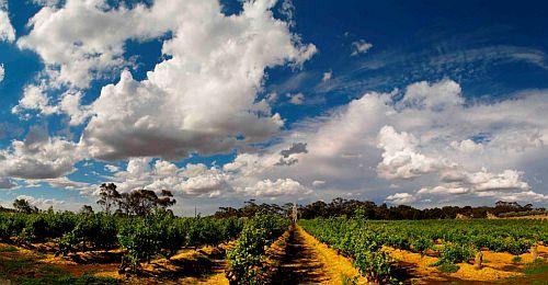 Australien-Wein