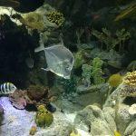 Wunderschöne Unterwasserwelt - Foto: Flying Media
